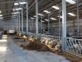 Sheep Rearing Shed Internal 5.JPG